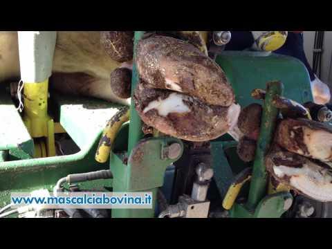Prevenzione di rimedi di gente di fungo