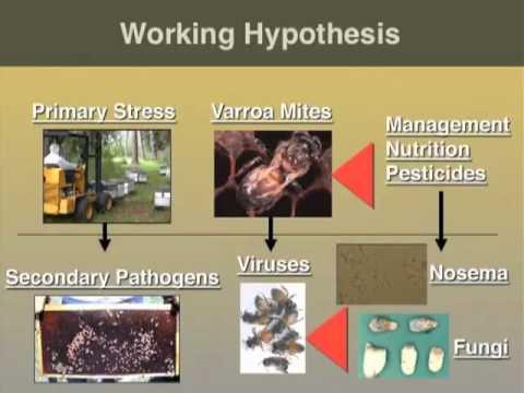 Az állati paraziták különböző csoportjai származási útjai