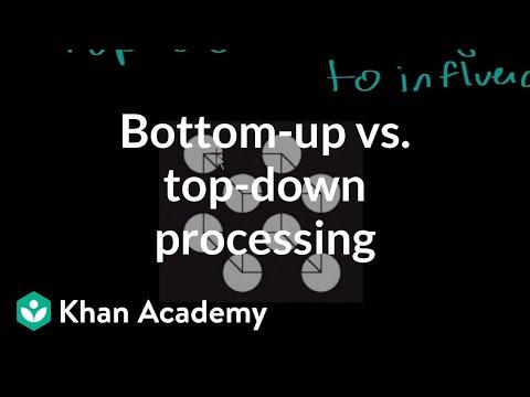 Bottom-up vs  top-down processing (video) | Khan Academy