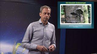 Thumbnail for video: Evolutionsargumenten: Naturligt urval - Biblisk kreationism avsnitt 10 - Göran Schmidt