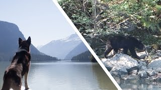 Finding Bears in Canada | Canadian Rockies Road Trip