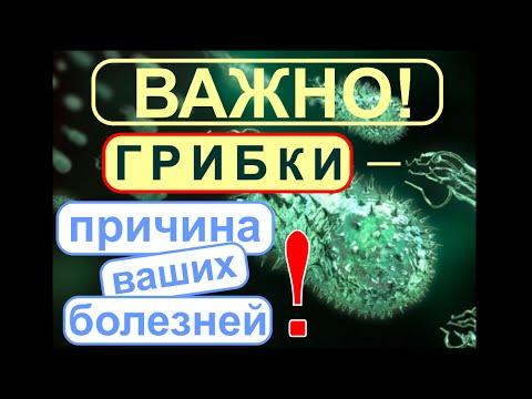 Лямблии лечение метронидазол