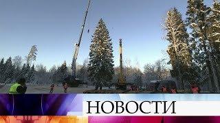 Главную новогоднюю елку России срубят в Щелковском районе Московской области.