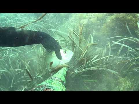 Fotografia che pesca in trucchi