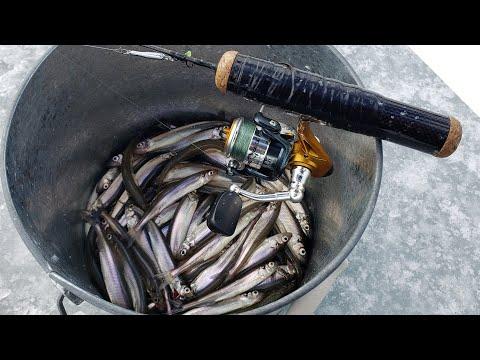 Isfiskeri efter smelt