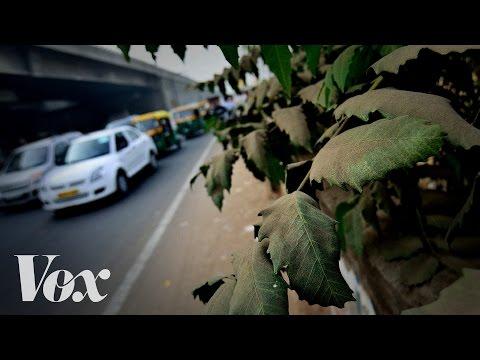 Proč by měla města sázet více stromů - Vox