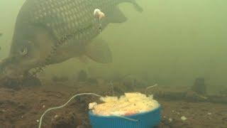 Укроп прикормка для какой рыбы
