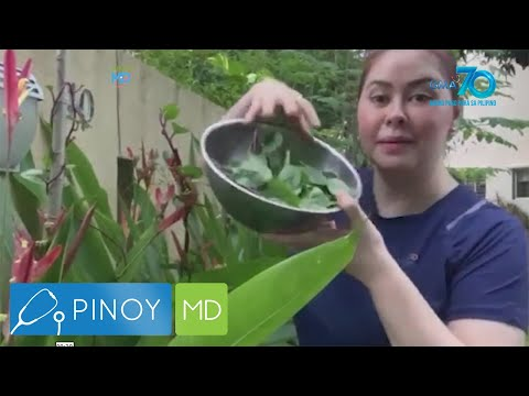[GMA]  Pinoy MD: Connie Sison, ipinasilip ang kanyang mini garden!