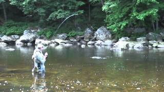 Fly Fishing the Deerfield River