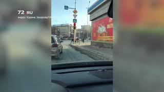 Корова бегает по Тюмени