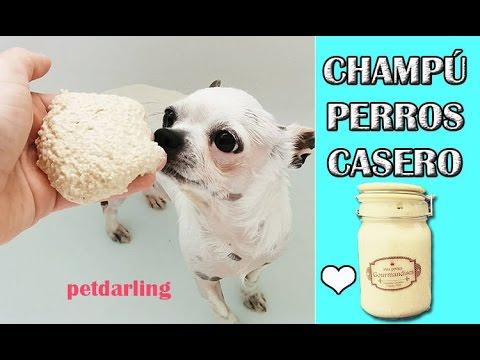 CHAMPÚ PARA PERROS Y GATOS AVENA - Piel sensible ★ DIY PetDarling