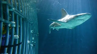 Swimming With Sharks At Point Defiance Zoo! (Washington 🇺🇸)