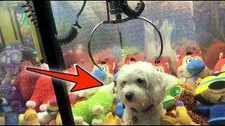 DOG LOCKED INSIDE CLAW MACHINE! | JOYSTICK