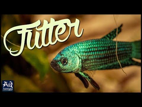 DAS BESTE FISCHFUTTER | AquaOwner