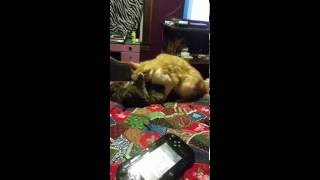 My two male cats having sex...... wtf