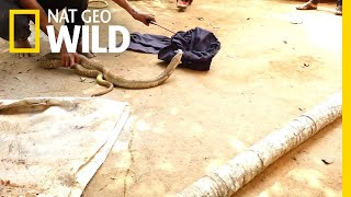 Snake Catcher Risks Life to Rescue Cobra From Well | Nat Geo Wild