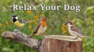 TV for Dogs : Dog Relaxation Videos for Separation Anxiety - Garden Birds and Bird Sounds