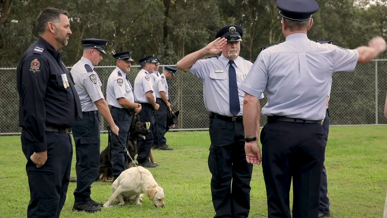Dog Graduation Day at Queensland Corrective Services