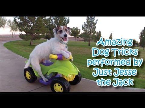 כלב מבצע טריקים מדהימים