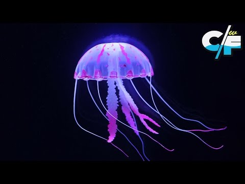 Top 10 Oldest Animal Species on Earth