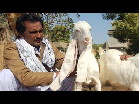 Kids||goat все видео по тэгу на igrovoetv online