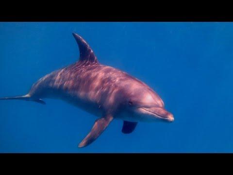 Delfine, Wracks & Meer - El Gouna 2015, El Gouna - allgemein,Ägypten