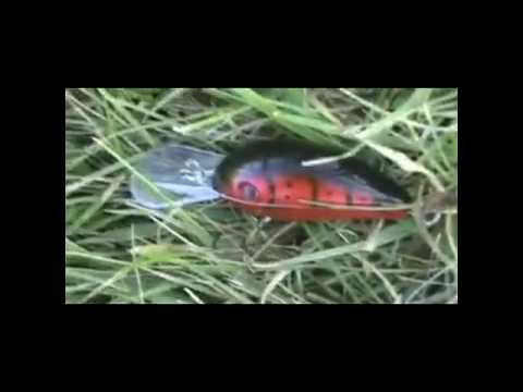 pond bass fishing 7/13/10