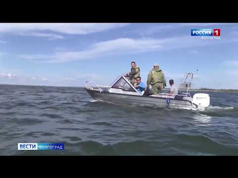 В Волгоградской области сотрудники Управления Россельхознадзора совместно с правоохранительными органами проводят рейды по пресечению незаконной ловли ценных водных биоресурсов