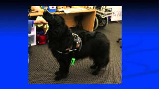 Wearable computers that help humans and their service dogs communicate TEDxPeachtree: