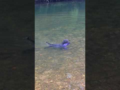 Jack enjoying the water!
