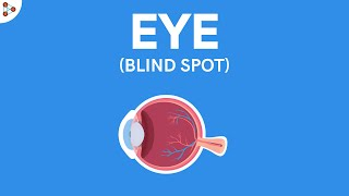 What is the Blind Spot of the Eye? | Physics | Don't Memorise