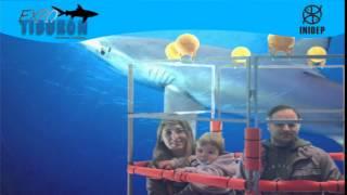 DIA 2 Expo Tiburon102