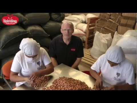 Keimling Rohkost Qualität - Herr Holler prüft Kakaobohnen in Ecuador