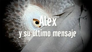 Alex, y su último mensaje