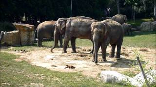 preview picture of video 'How much is the elephants?'