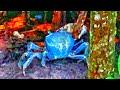 I found A Blue Alien Crab Invasion