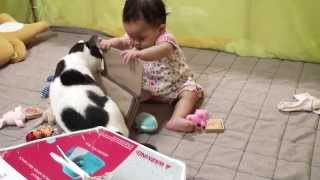 とにかく赤ちゃんと遊びたい猫 Cat Wants To Play With Baby