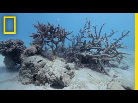 Dying Coral Reefs Found Around Samoan Island of Upolu | National Geographic