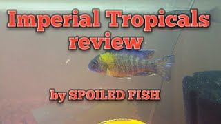 imperial tropicals blue neon peacock - 免费在线视频最佳电影