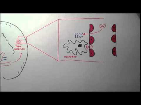 Анализ гепатит с на маркеры
