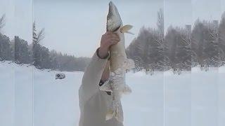 Щука на жерлицу весной. Pike 2.7 kg in imitation fish in the spring.