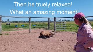 Making A Connection With Your Horse