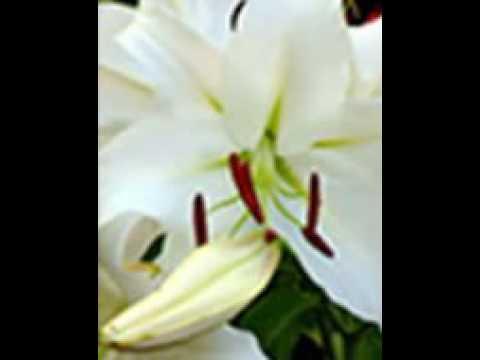 ราก Echinacea ในโรคสะเก็ดเงิน