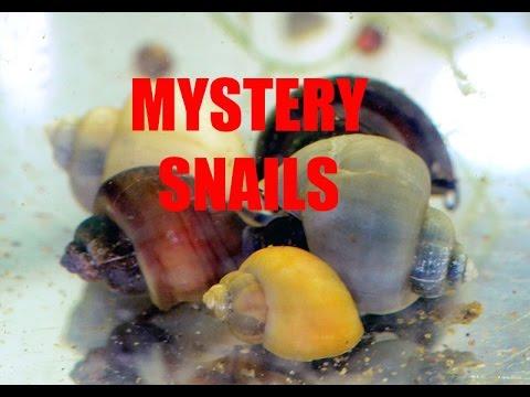 Asin mga tupa mula sa mga worm