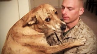 TRY NOT TO CRY: Dogs Meet Their Owner After Long Time II [NEW] (HD) [Funny Pets] - Video Youtube