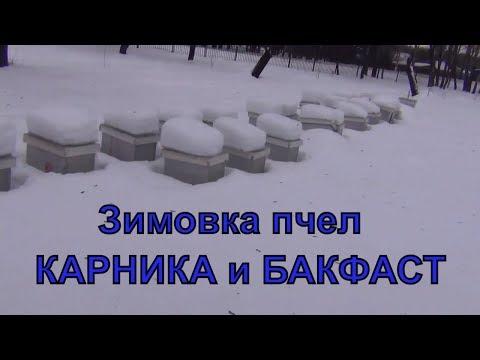 Контроль зимовки пчел КАРНИКА и БАКФАСТ на трех точках