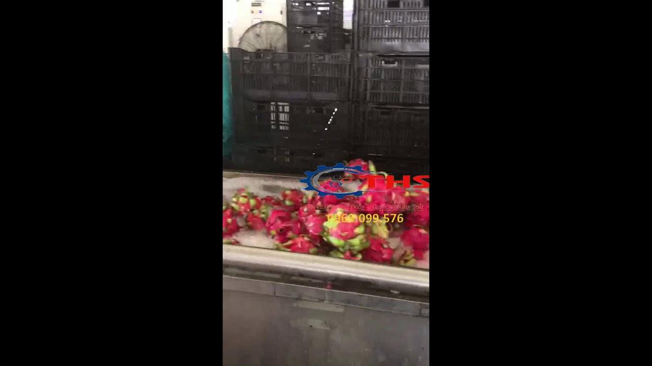 Băng tải Inox trong  dây chuyền rửa trái cây