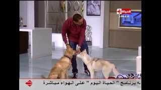 إنتبهوا أيها السادة - طريقة تدريب الكلاب على الهواء مع مدرب الكلاب ... فقرة خاصة لتربية الكلاب