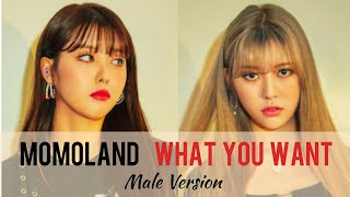 MOMOLAND (모모랜드)- What You Want Male Version