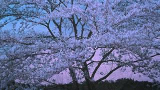"""ジュスカ・グランペール """"夢桜 ~愛しき桜、愛おし桜~"""" (Official Music Video)"""